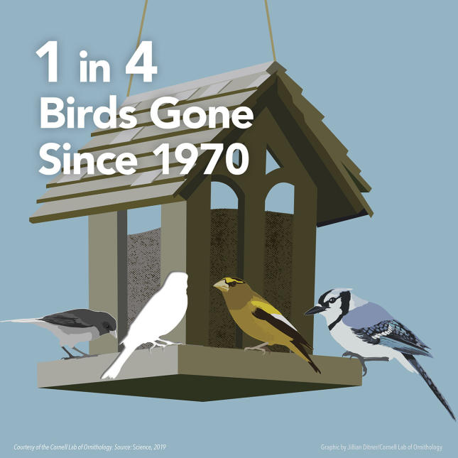 3 Billion Birds - 1 in 4 Birds Gone